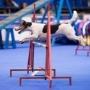 World Dog Show-2016 в Москве приняло 27 тысяч собак