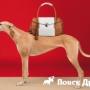 Trussardi выпустит коллекцию собачьей одежды и аксессуаров