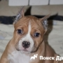 Купирование хвостов и ушей отрицательно влияет на собак
