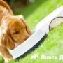 Собачьи корма влияют на способность давать потомство