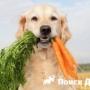 Американцы приучают собак к веганству