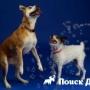 В продаже появились мыльные пузыри для собак