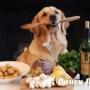 Ученые назвали опасные для собак продукты