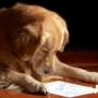 Собаки могут понять больше, чем нам кажется