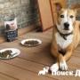 Латвийцы профинансировали исследование собачьего корма
