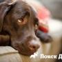 Ученые проследили воздействие плацебо на собак