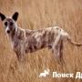 Найдены останки собаки, одомашненной 7000 лет назад