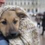 Госдума планирует закрепить права собак