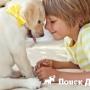 Собаки помогаю детям избавиться от страха