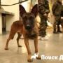 Клонированные собаки поступят на службу в России