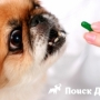 Собакам будут выписывать рецепты в электронном виде
