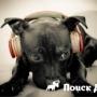 Собаки предпочитают слушать регги и софт-рок
