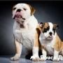 Ученые опровергли мнение о соотношении возраста собаки и человека