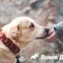 Японцы выявили у собак чувство морали