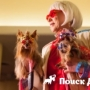В Нью-Йорке прошла неделя моды для собак