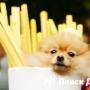 Бельгийцы придумали картошку фри для собак