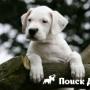 Дорогие породы собак доступны в кредит