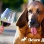 В США выпустили вино для собак