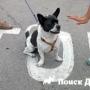 В Барселоне запретили выгул собак в Туро