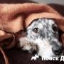 Ученые установили природу «виноватого взгляда» собак