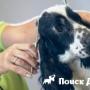 В Москве пройдет Чемпионат России по грумингу