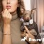 Mishiko выпустила собачьи ошейники за 1,5 млн