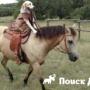 Лабрадор ретривер научился управлять лошадью