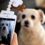 Сделать селфи с собакой поможет Flexy Paw
