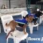Правопорядок в Бангкоке защищают бездомные собаки