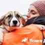 В Росси появился электронный помощник для бездомных собак
