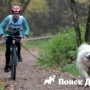 В России прошли уникальные гонки на собачьих упряжках