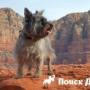Новую экспедицию на Марс возглавят собаки