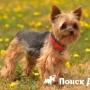 Россияне назвали ТОП-5 популярных пород собак