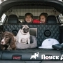 Ниссан адаптировал X-Trail для собак