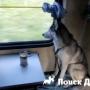 РЖД начала онлайн продажу билетов для собак