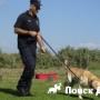 В России могут создать зоополицию