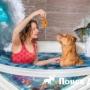 Фотограф из Литвы создала «волшебную» фотосессию с собаками