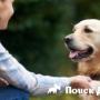 Установлено влияние собак на настроение студентов