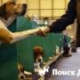 В Англии пройдет самая крупная выставка собак