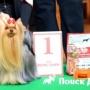 В Санкт-Петербурге прошла выставка собак Зоошоу