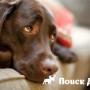 В Бразилии запретили фейерверки из-за собак