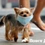 Ученые установили причины аллергии у собак