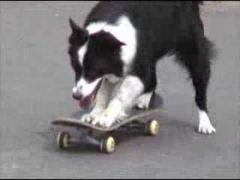 Трюки хорошо обученной собаки