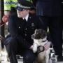 Собаки помогут в борьбе с употреблением допинга