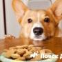 Микрофлора собак оказалась похожа на человеческую