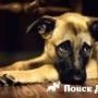 В Москве пройдет выставка беспородных собак