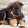 Ученые установили период рождения собак с низким уровнем болезней