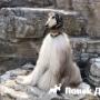 В Китае живет самая стильная собака