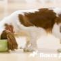 Ученые узнали о вкусах собак