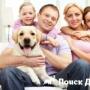 Ученые определили причины увеличения роли собак